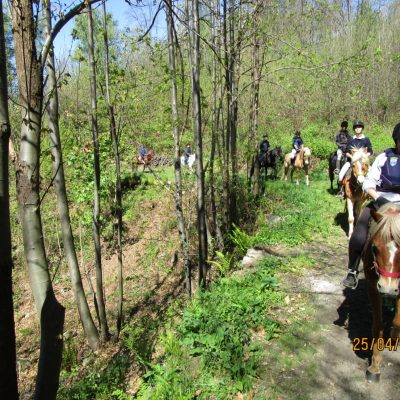 Trekking Horse Italy