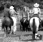 3 2 1 Team Riders presenta il Nuovo Settore Stock